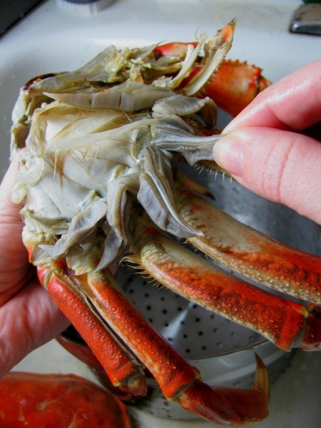 lobster mandibles Crayfish dissection virtual crayfish dissection how is their function different from that of the mandibles) to eat it when eating a lobster.
