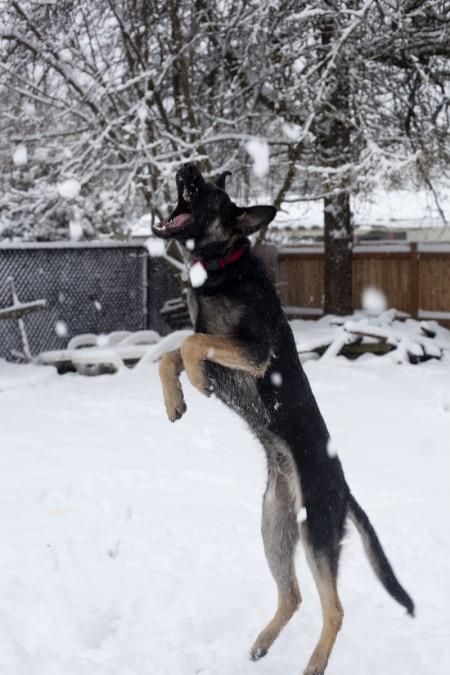 phurba-catching-snow