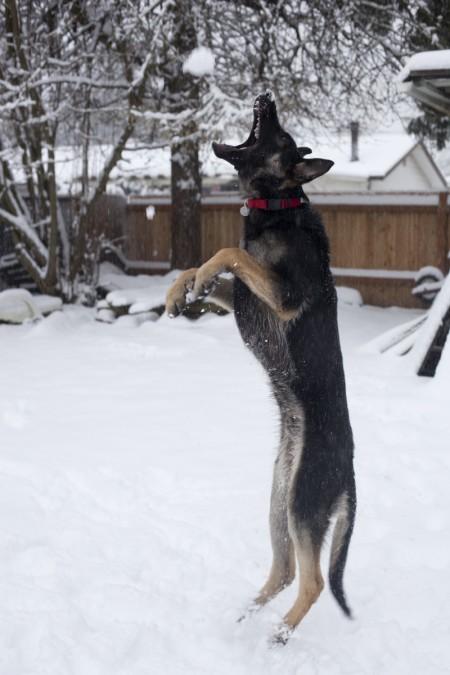 phurba-catching-snowball