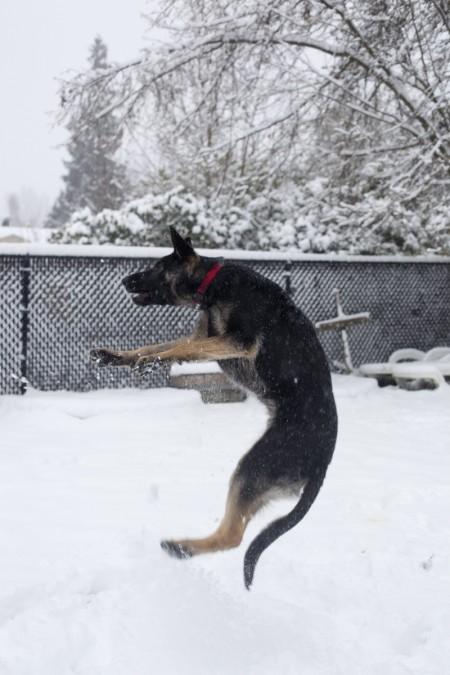 phurba-jumping-snow