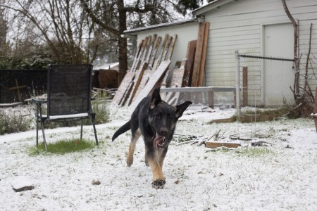 phurba-running-happy-snow