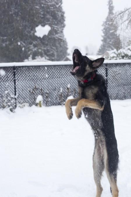 snowball-fight-phurba