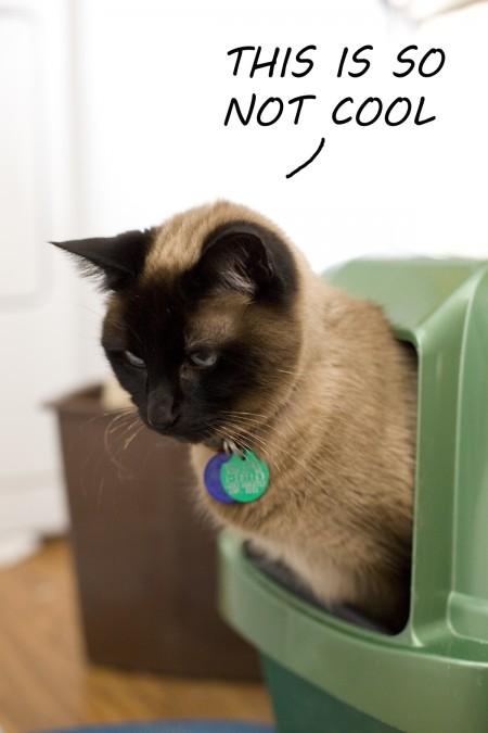 Cappucino kitty litter box not cool