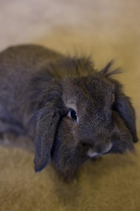 Chloe-the-bunny