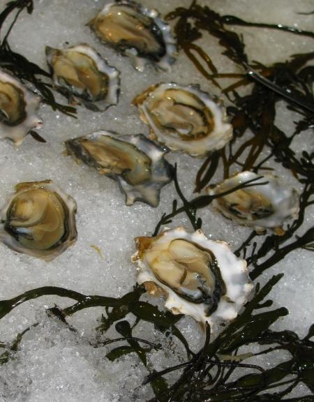 Foodbuzz Festival oyster bar