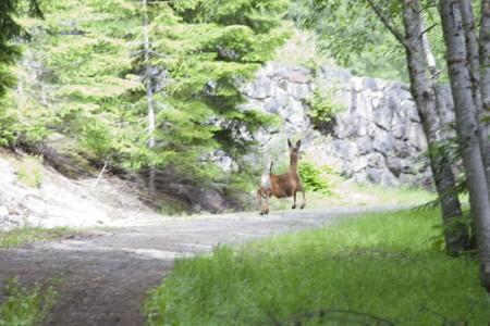 baby-deer-jumping