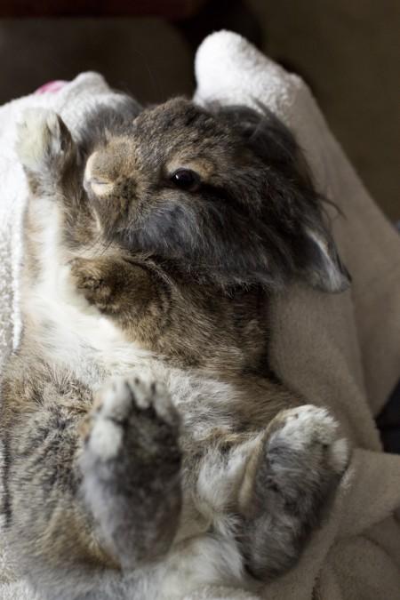 bunny-on-back-posing