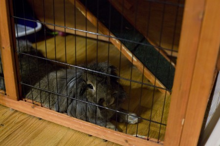 chloe-relaxing-in-cage