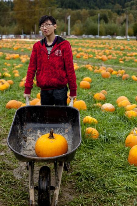 fred-pumpkin-field