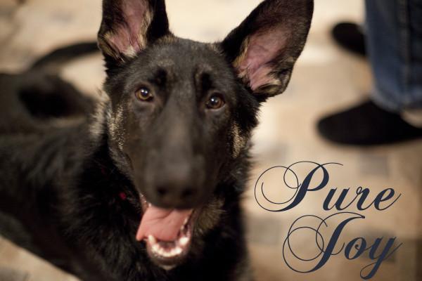 pure-joy-phurba