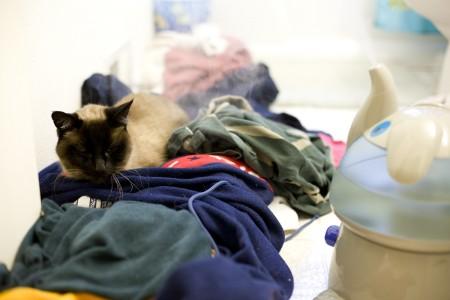 sick-kitty-getting-humidifier