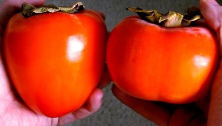 two kinds of persimmons