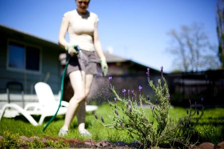 watering-herbs