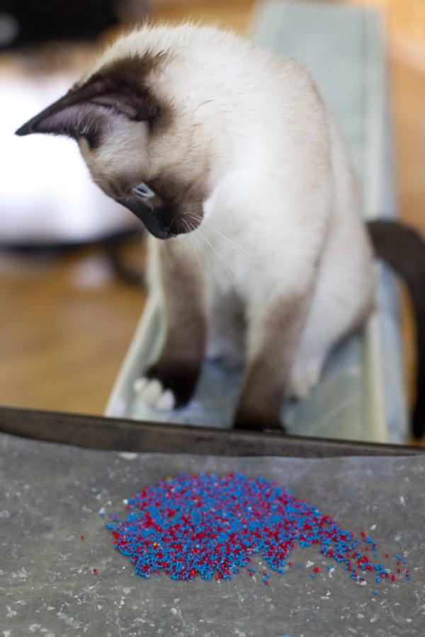 haldir-curious-sprinkles