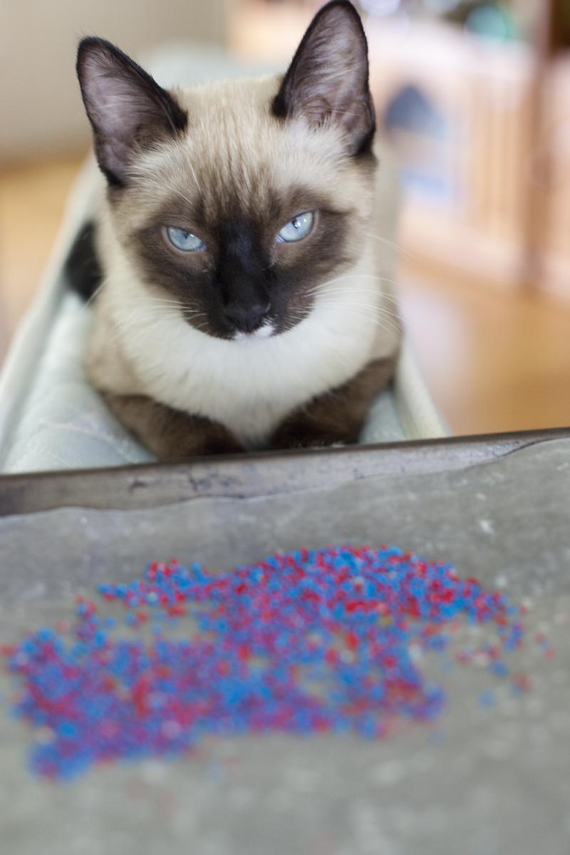 haldir-guarding-sprinkles