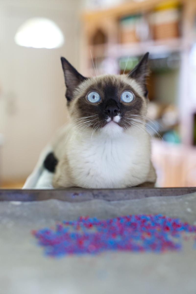 haldir-scared-sprinkles