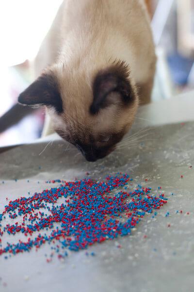 haldir-sniffing-sprinkles