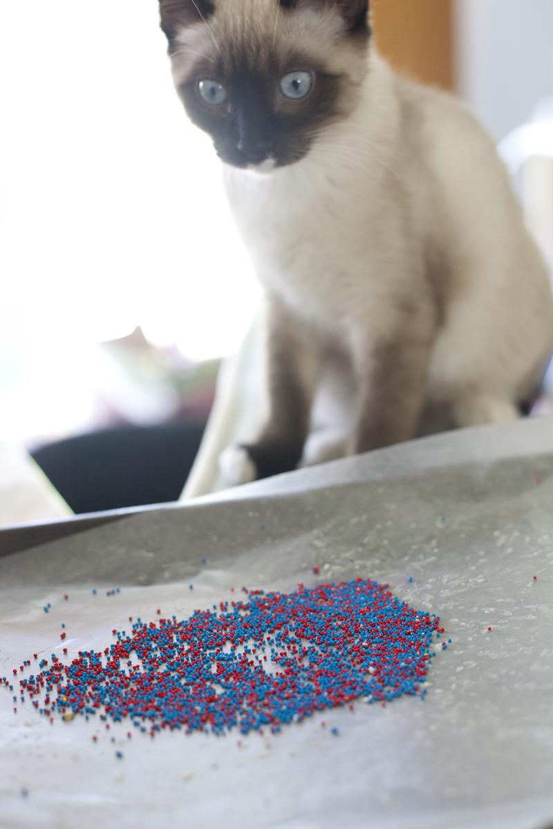 haldir-staring-sprinkles