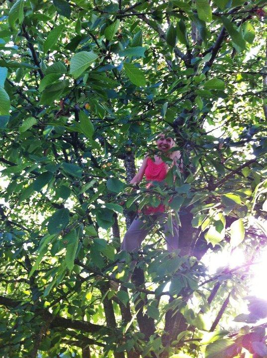 diana-cherry-tree