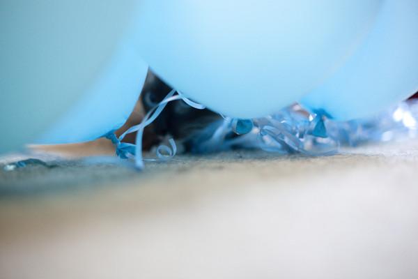 kitten-hiding-balloons