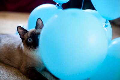 kitten-peeking-balloons