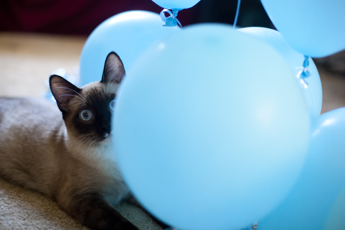 kitten-peeking-balloons
