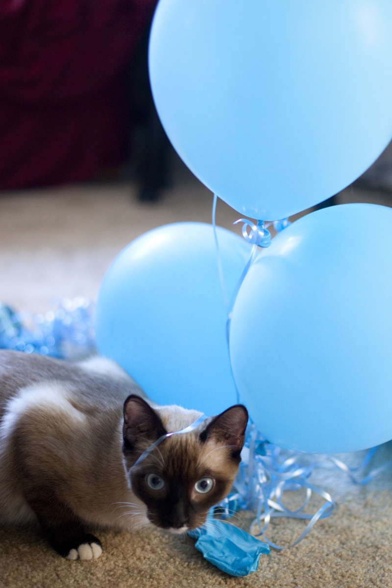 balloons-kitten-tangled