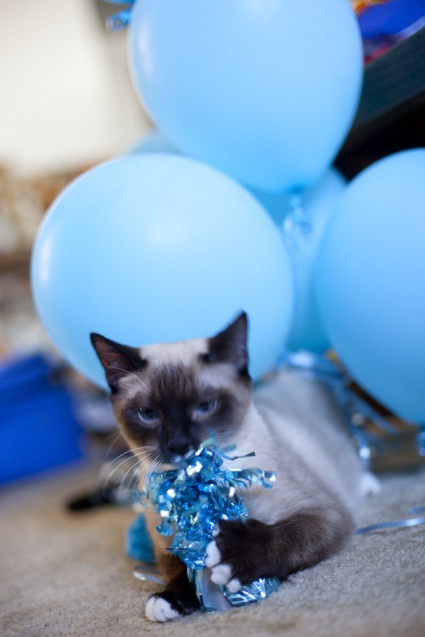 kitten-eating-balloons