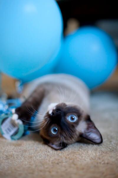 kitten-with-balloons
