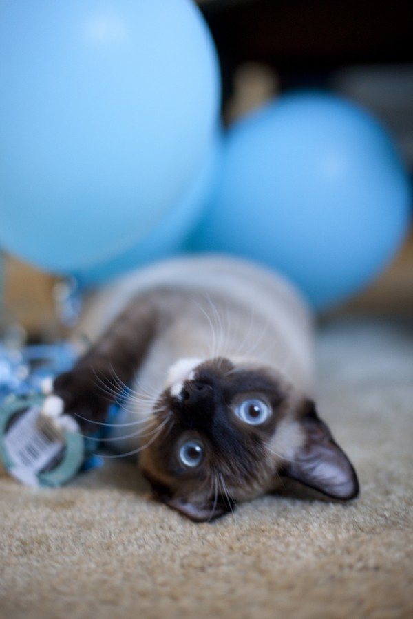 kitten-with-balloons