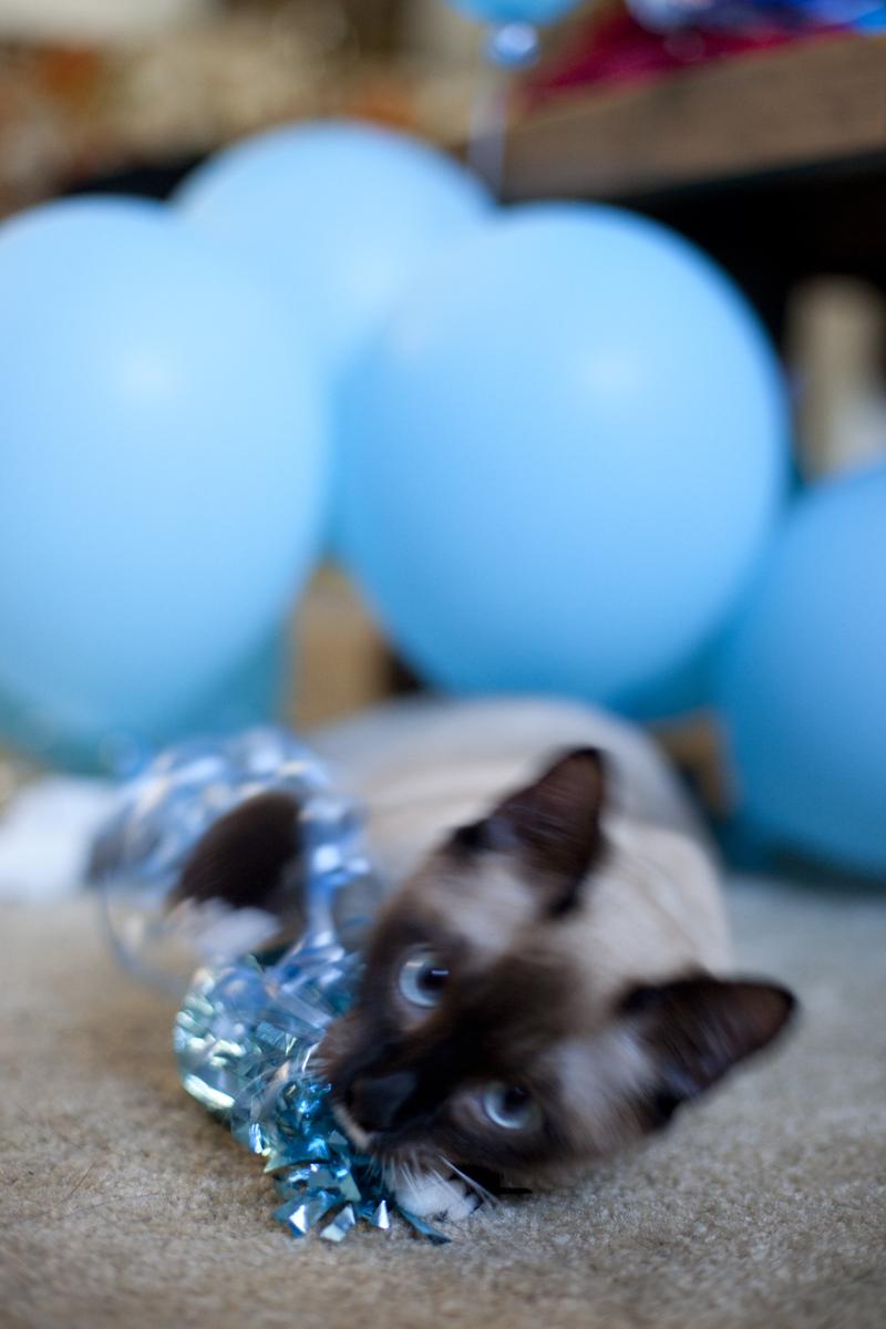 kitten-wrestling-balloons