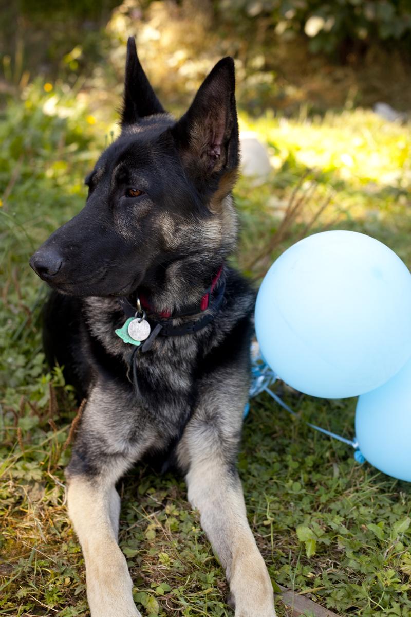 bored-dog-balloons