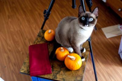 haldir-pumpkin-muffin-shoot