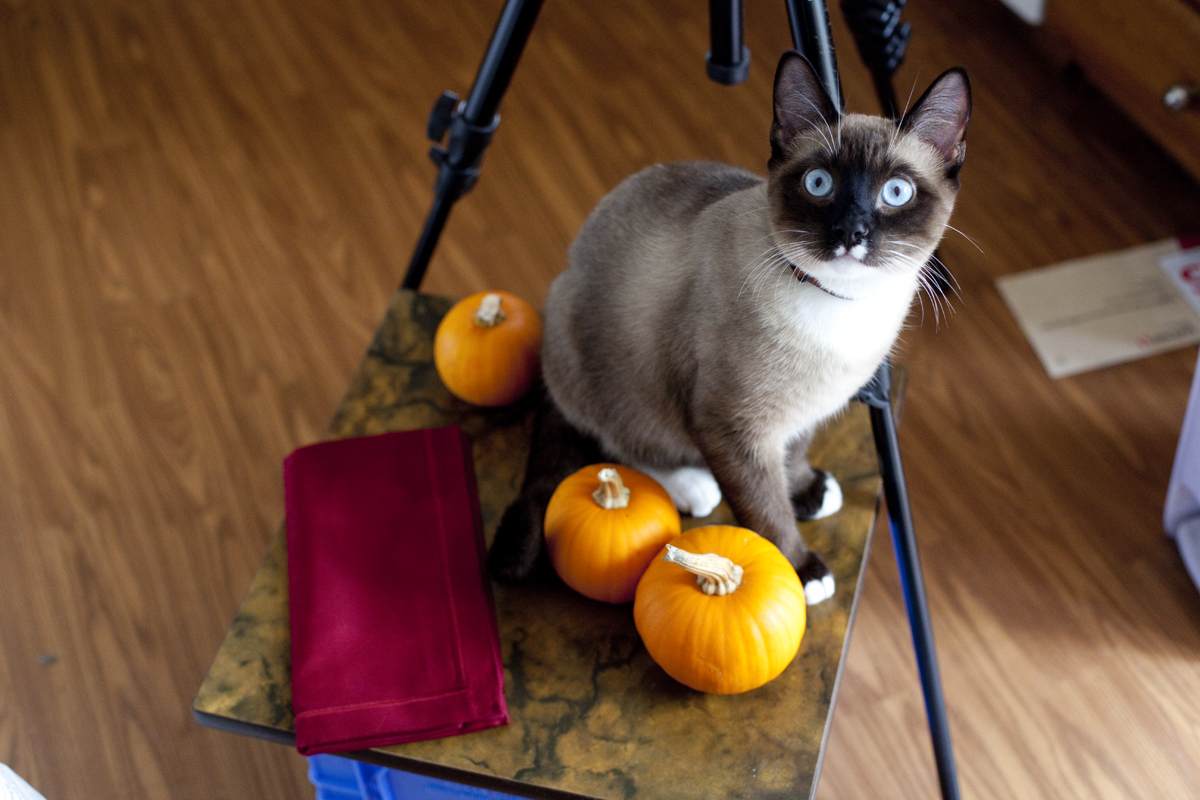 haldir-pumpkin-muffin-shoot