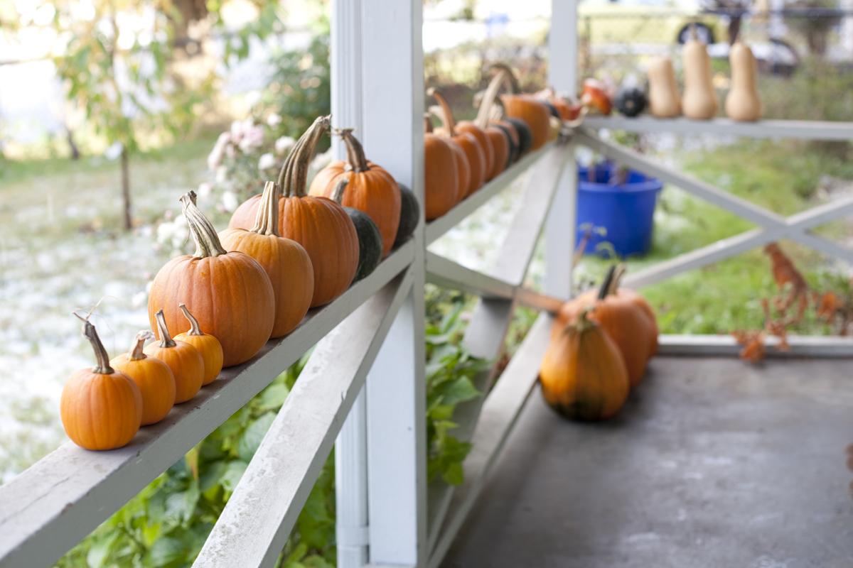pumpkins-on-railing