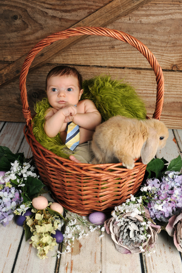 Baby-Bunny-Spring