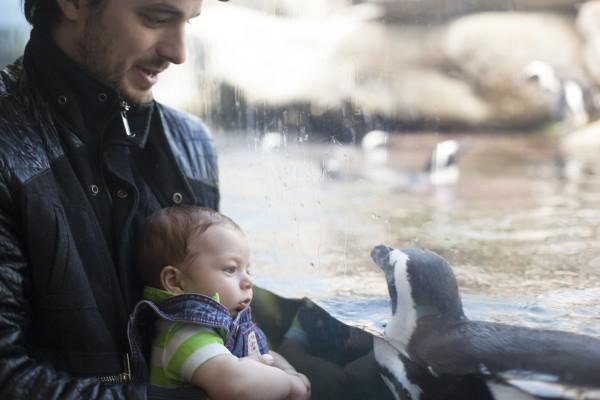 IMG_8440corban-penguins5