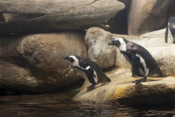 IMG_8445corban-penguins2