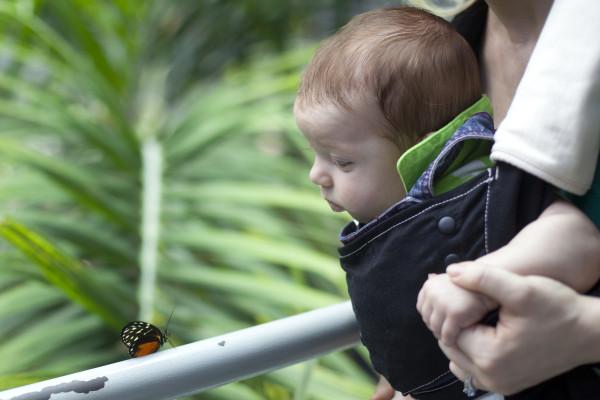 IMG_8461corban-butterfly