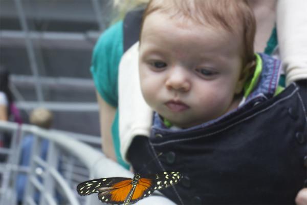 corban butterfly