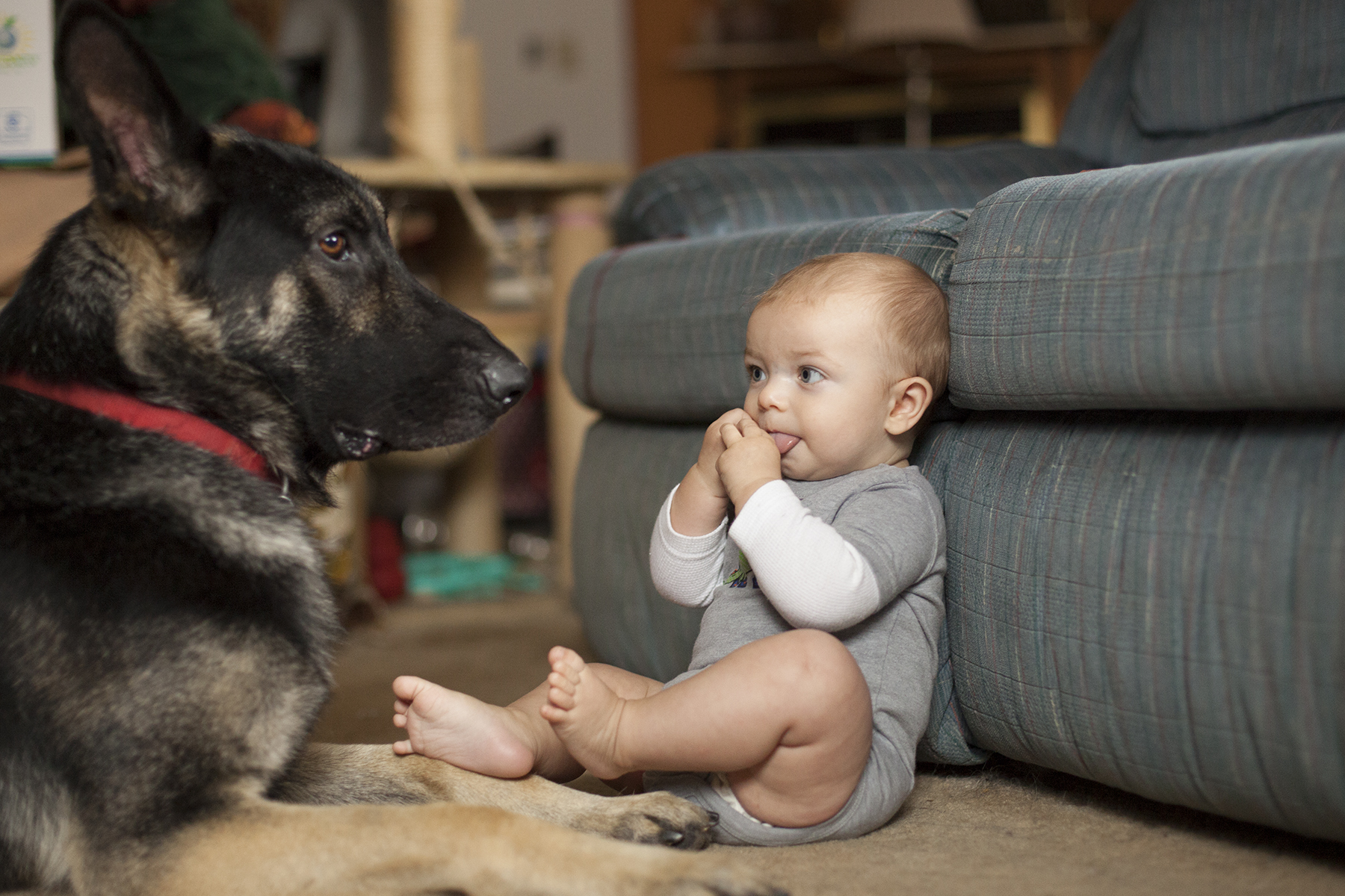 eye of the beholder puppy love   eating richly