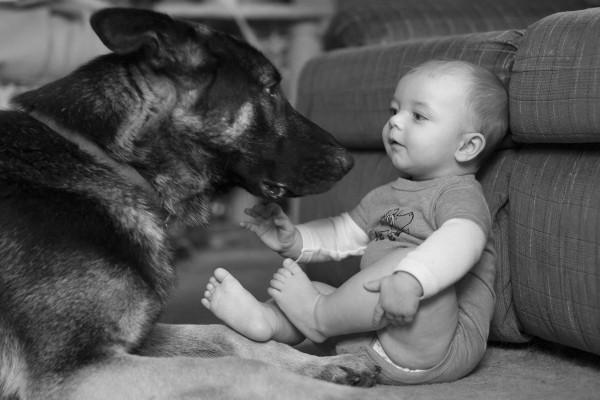 Baby and German Shepherd - EatingRichly.com