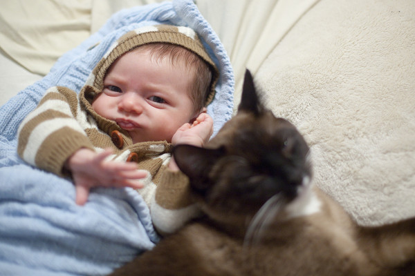 Baby fighting for bed with kitty | EatingRichly.com