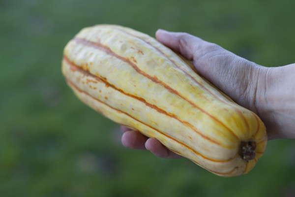 Easy recipe for roasted delicata squash with homemade seasoned salts - EatingRichly.com