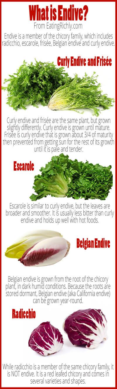 Chicore endive vegetale