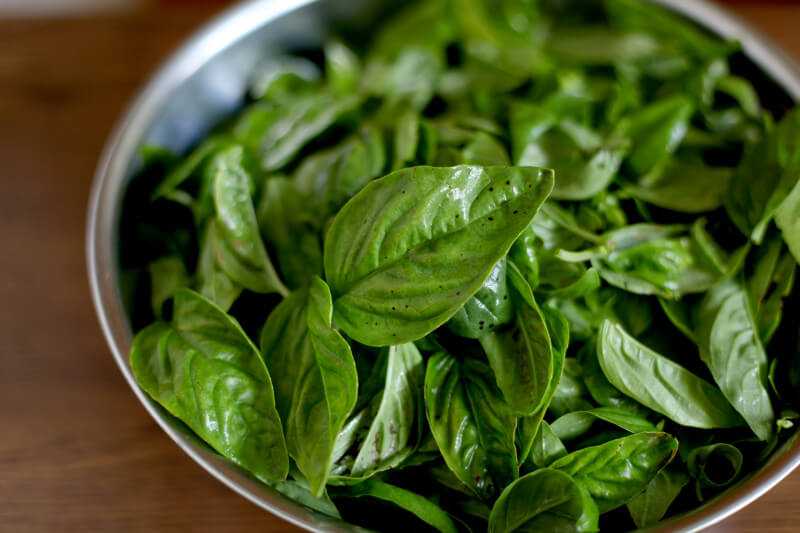 Basil is a wonderful herb that your kids will love helping you harvest to turn into pesto. Get more tips for growing a kids vegetable garden at EatingRichly.com