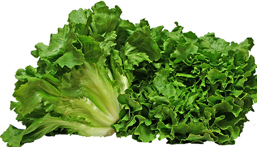 """Is curly endive the same as frisée? Is radicchio the same as red endive? And how do you even pronounce it? We answer your question, """"What is endive"""" at EatingRichly.com"""