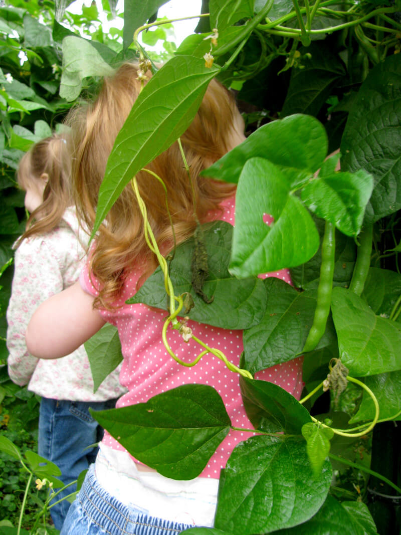 Pole beans can be used to create a magical play space for kids as well as a source for snacking. Get more tips for growing a kids vegetable garden at EatingRichly.com