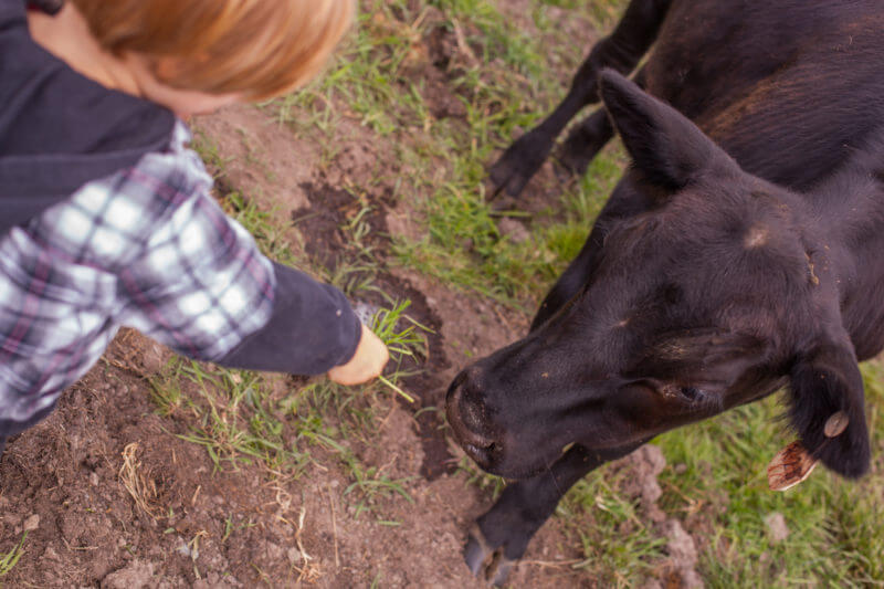 Where does beef come from? Our kids visit a local farm to meet their meat and make sure they understand why we always buy locally raised meat. See the whole story on EatingRichly.com