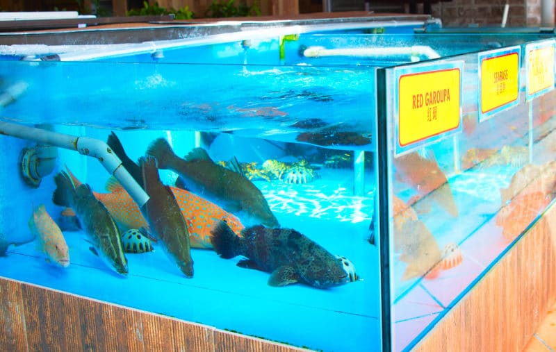 Live fish swimming in grocery store tank